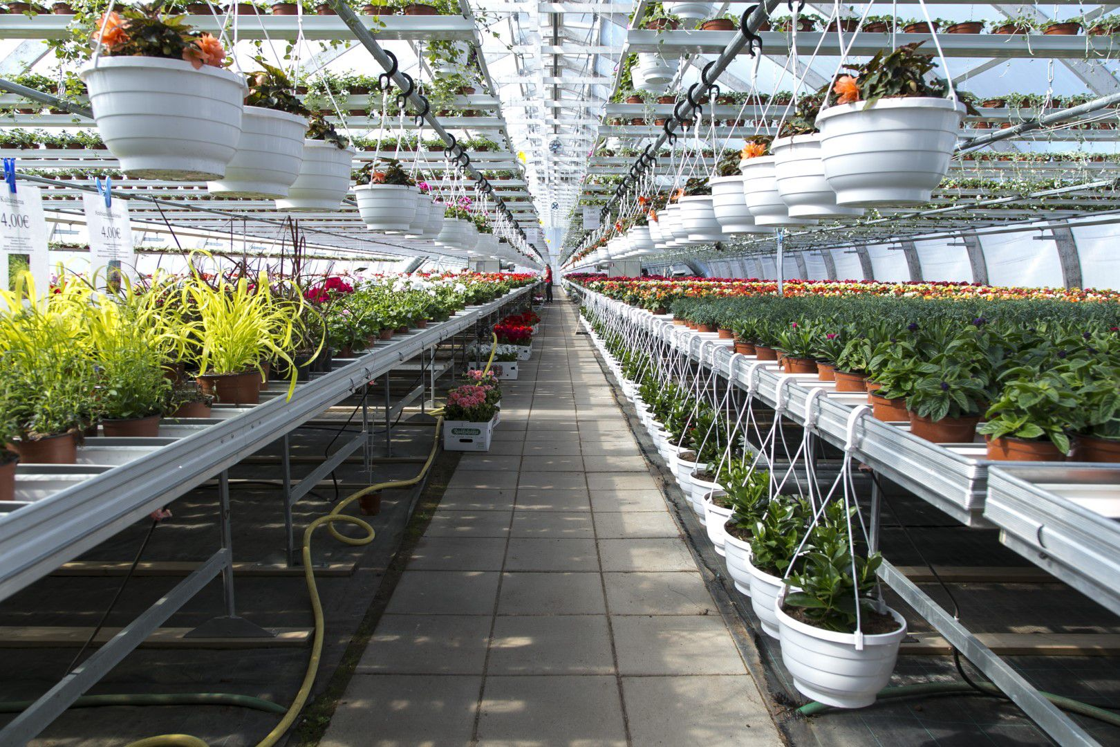 Olemme erikoistuneet kasvihuonetuotannossa kesäkukkiin.
