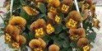 orvokki amp_ honeybee
