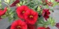Miljoonakello, punainen (Smaller 120 x 120)