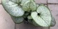 Rotkolemmikki (Smaller 120 x 120)